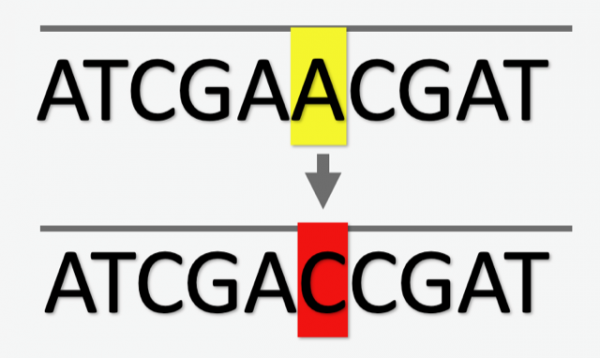 DNA sequence variant
